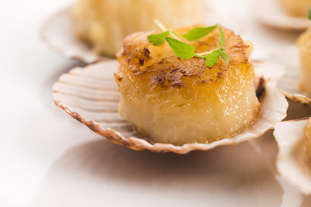 st jacques: scallops