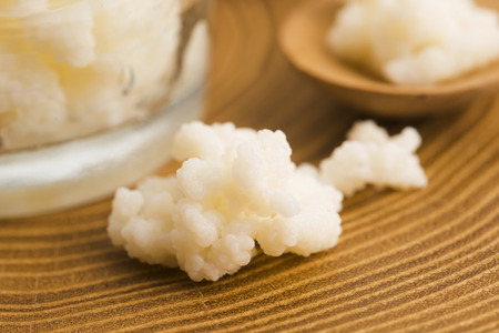 kefir: Organic probiotic milk kefir grains