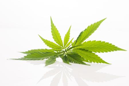 Cannabisblad, marihuanablad op wit wordt geïsoleerd dat Stockfoto