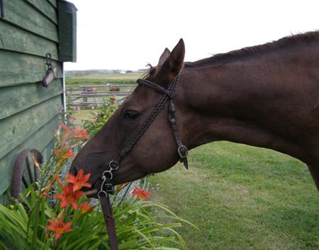 Demeter eating lilies Zdjęcie Seryjne