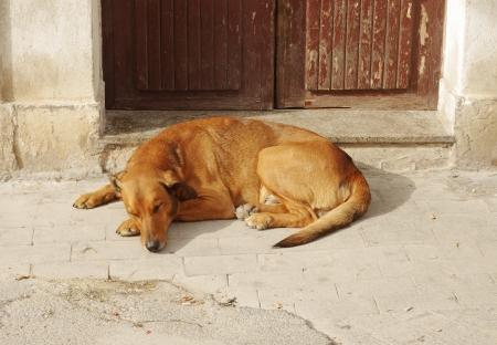 large dog: large dog sleeping Stock Photo