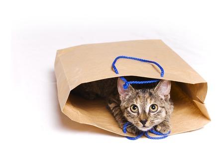 tabby kitten in a paper gift bag