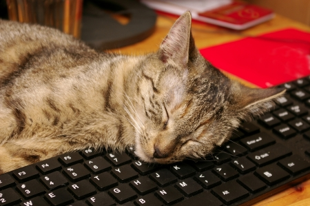 Tabby cat sleeping on a computer keyboard photo