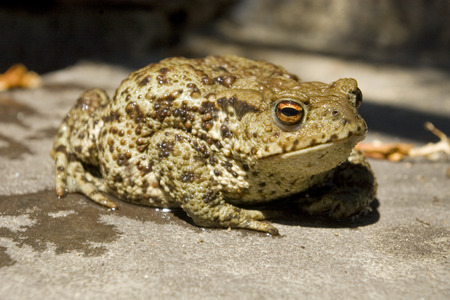 wet toad Stock Photo - 27349502