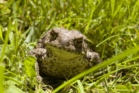 toad Stock Photo - 27349505