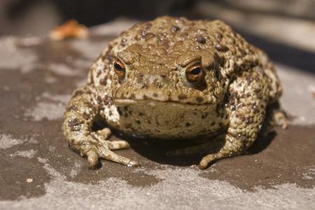 wet toad