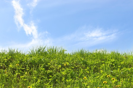 Fresh green meadow and blue sky Stock Photo