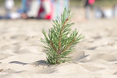 pine branch stuck in the sand on a beach