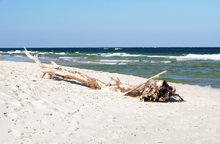 white sand beach and a dry tree trunk, Hel, Poland