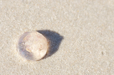 jellyfish lying on a beach sand background with text place