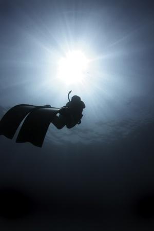 Freediver, great barrier reef