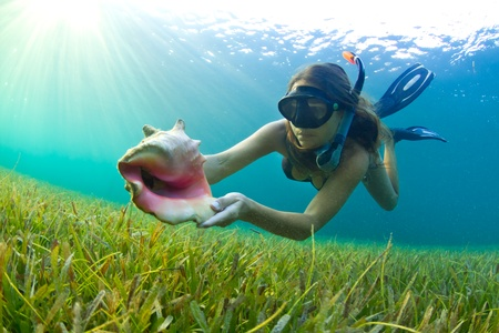 snorkelling: A young girl snorkelling in The Caribbean and finding a Conch shell