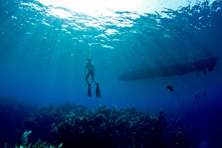 free diving: A young female freediver returns to the surface near her boat.