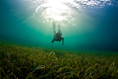 honduras: A Young woman dives down to explore the se grass bad in Honduras.