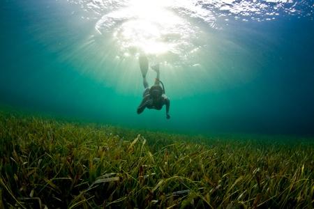 apnea: Una giovane donna immersioni gi� per esplorare se l'erba cattiva in Honduras. Archivio Fotografico