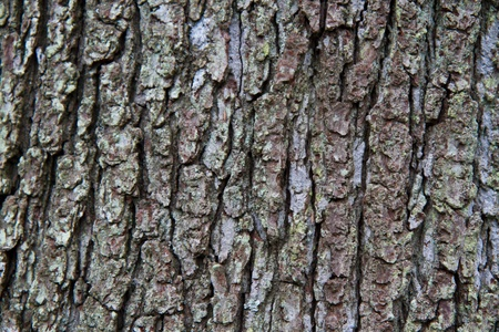 Close up of textured tree bark Stock Photo - 12965572