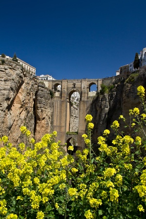 The flower below Ronda's new bridge in full bloom. Stock Photo - 13162596