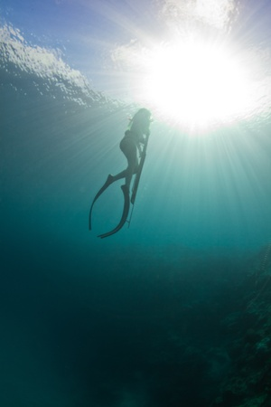 spearfishing: Returning to the surface to breath while spearfishing on the Great barrier reef.