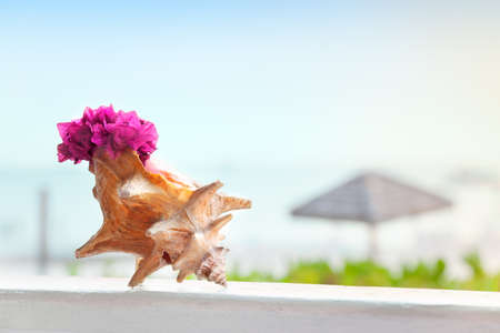 Beachside restaurant decorated with colorful bouganivillea in a graceful conch shell photo