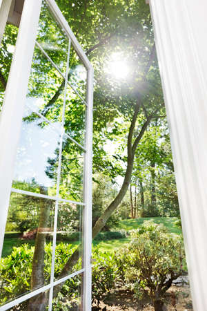 Window open to sunny, summer garden