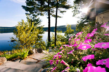 Bright petunias on a patio overlooking a lake photo