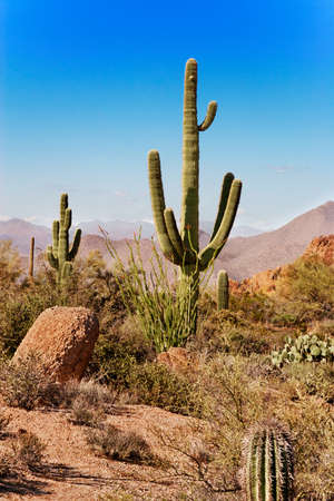 saguaro: Saguaro, ocotillo and the mountains of the Tonto National Forest, Arizona