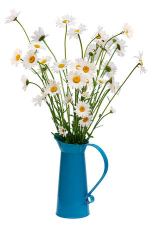 daisies: White oxeye daisies in a turquoise enamel jug Stock Photo