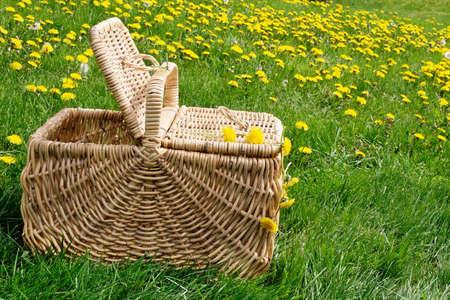 basket: Picnic basket in a field of dandelions