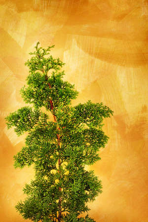 branche sapin noel: Unadorned Christmas tree branch against hand painted gold background