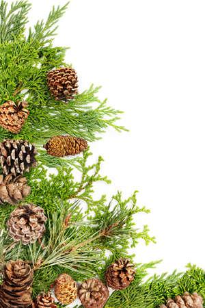 hemlock: Border of pine, fir, cypress & hemlock branches with pine cones