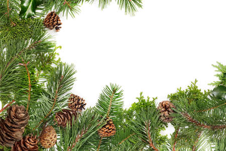 cicuta: Border of pine & fir branches, holly and pine cones