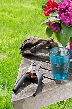 Put aside the secateurs & gloves for a quick drink of cool water photo