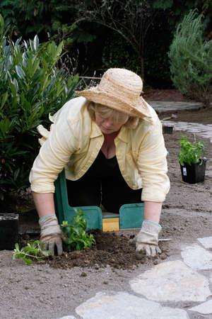 Transplanting new shrubs from nursery pots photo