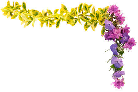 yellows: Border of spring leaves and flowers in purples and yellows
