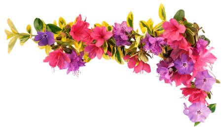 borde de flores: Frontera de flores y hojas de primavera
