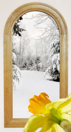 Winter view with thoughts of spring blooming Stock Photo - 9925815
