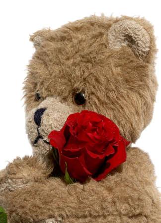 Bear waits with a rose photo