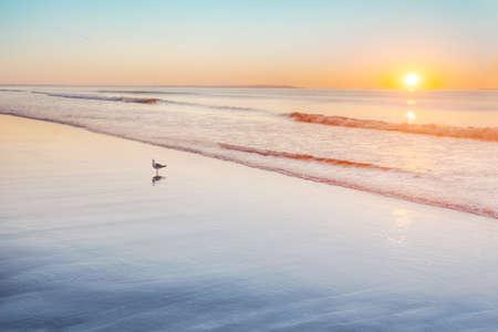 horizon reflection: Gull standing on wet sand at sunrise on Maine beach Stock Photo