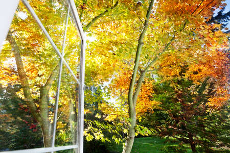 Window has a view of gardens leaves in the autumn afternoon sun photo