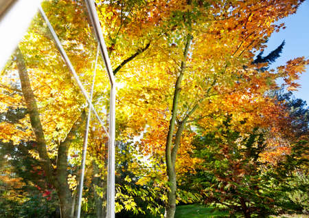 Fall foliage in the afternoon sunlight through an open window Stock Photo - 11006962