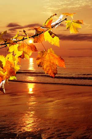 Sunrise over the beach as seen through a fall maple branch photo