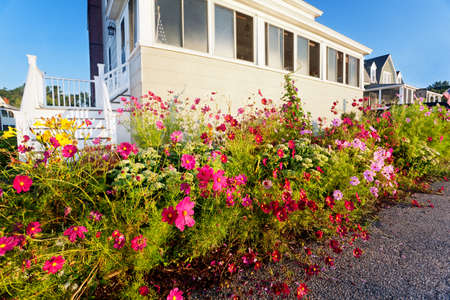 beachfront: Glorious tangle of summer flowers takes over the sidewalk on a beachfront Maine street