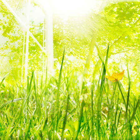 Bright sun, new growth and open windows of Spring photo