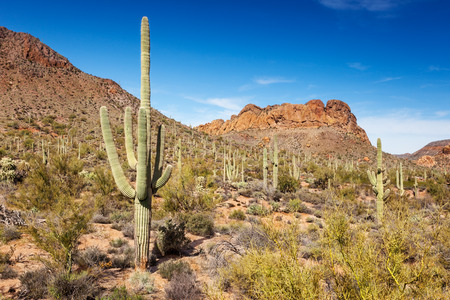 tonto national forest: Stunning views beside the Apache Trail through the Tonto National Forest, near Apache Junction, AZ Stock Photo