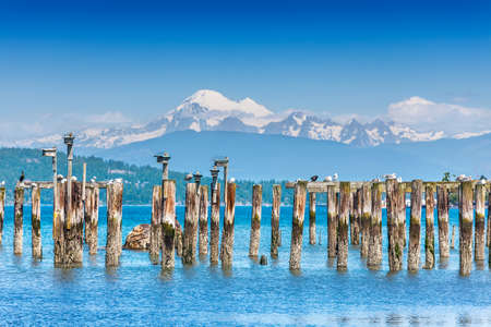 pilings: Old pilings at Anacortes ferry terminal give nesting boxes a great view of Mount Baker