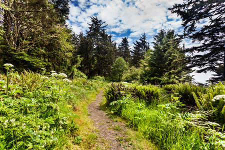 desilusion: Sendero a lo largo del acantilado newar la luz de la cabeza del Norte de Cabo decepción State Park, Washington