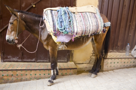 over burdened: A funny mule is carrying some stuff in a bazaar of Fez, Morocco