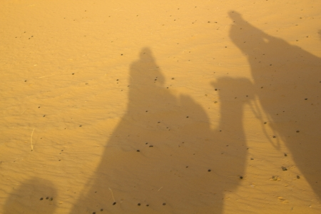 Shadows of the camels in the Erg Chebbi desert photo