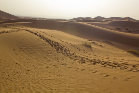 Begin the day in the Erg Chebbi desert photo