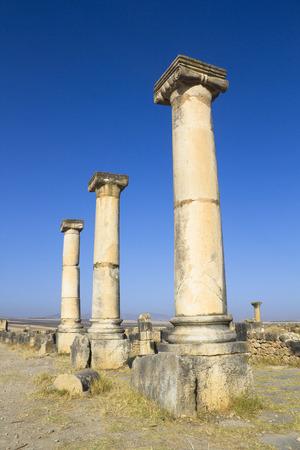 volubilis: Volubilis columns